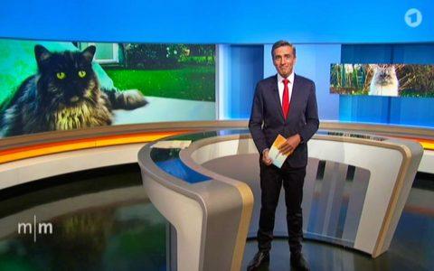 Cindy und Bert schaffen es am Weltkatzentag sogar bis ins ARD-Fernsehen (zusammen mit Herrchen...;-)