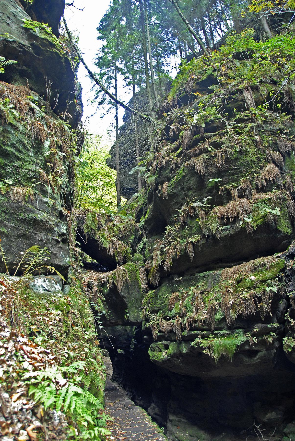 Der Uttewalder Grund: Wild, dunkel, einsam.
