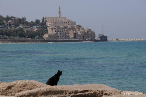 Katzensprung nach Jaffa: Und plötzlich finden Sie sich nur einen Straßenzug weiter mitten im Orient wieder – in der früheren arabischen Stadt Jaffa – die laut Bibel kurz nach der Sintflut entstanden ist und heute zu Tel Aviv gehört.