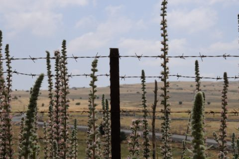Attention: Eingezäuntes Minenfeld kurz vor den Golanhöhen.